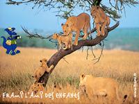 Fond d'écran Frami au Kenya